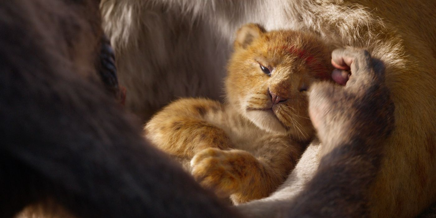 It is a photo of Massif Lion King Pictures