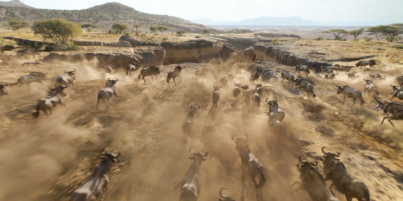 Image result for lion king live action stampede