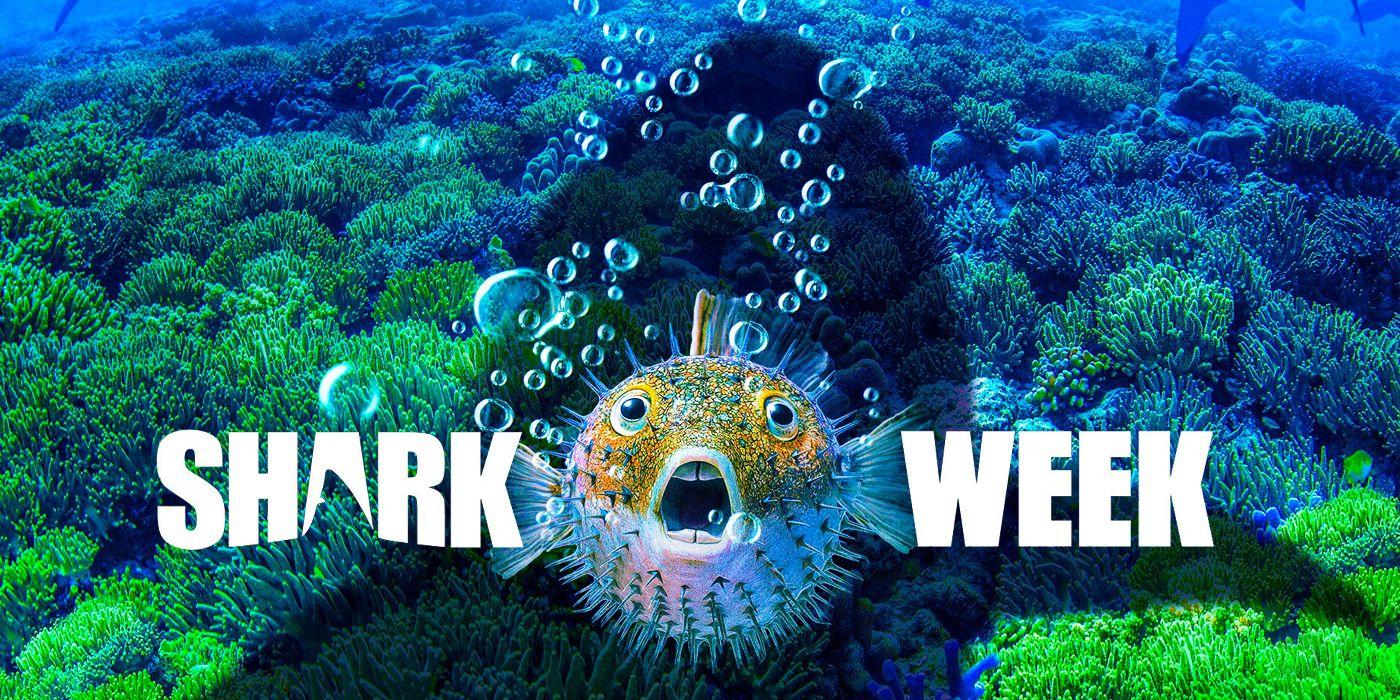 Discovery's Shark Week 2019 Schedule & Must-Watch Specials