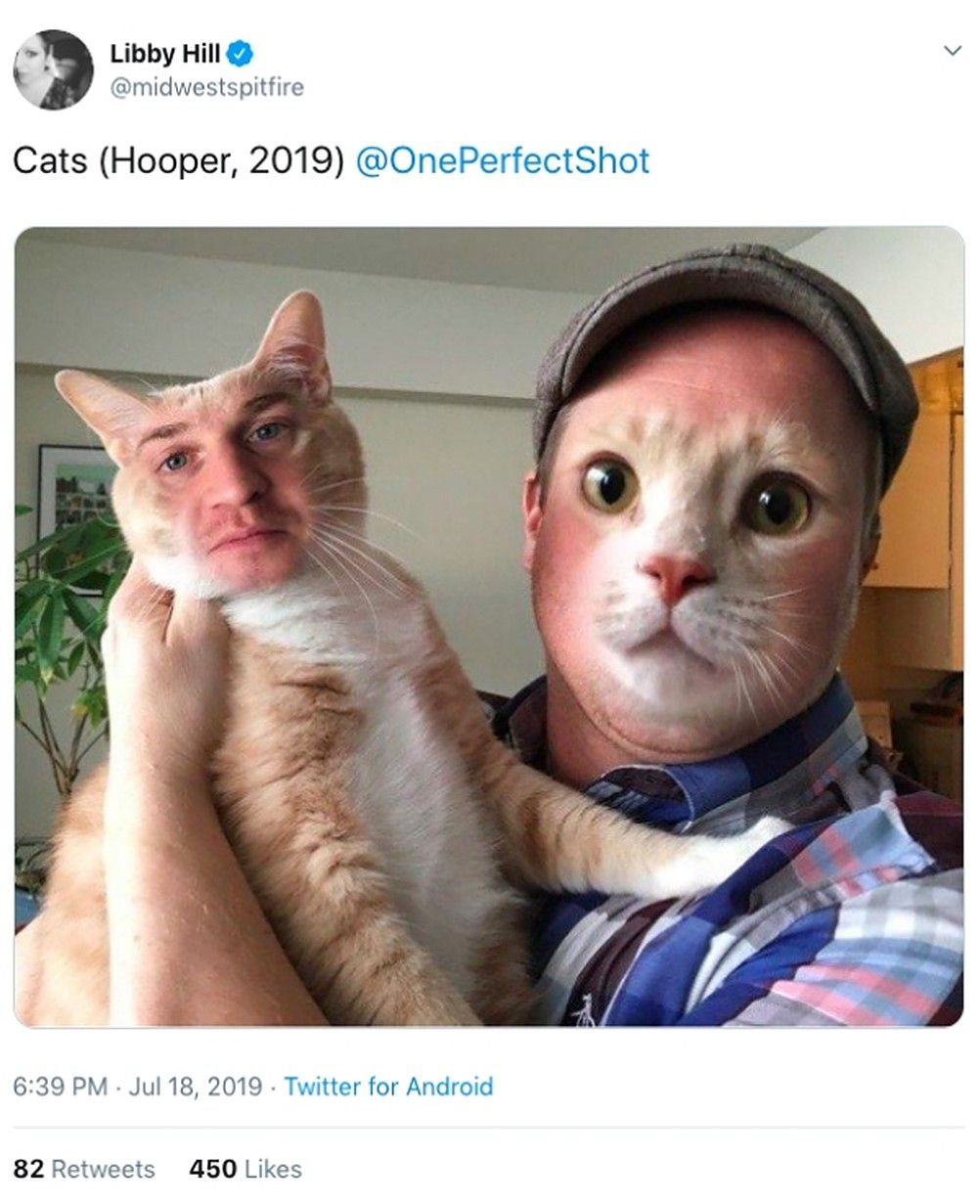 10 Hilarious Memes About Cats (2019) That Will Make You Laugh