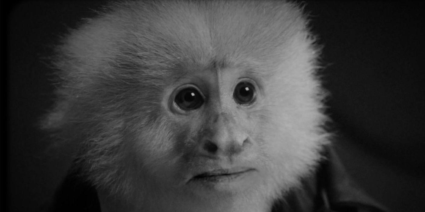 David Lynch Interrogates Friends Monkey In Netflix's What Did Jack Do?