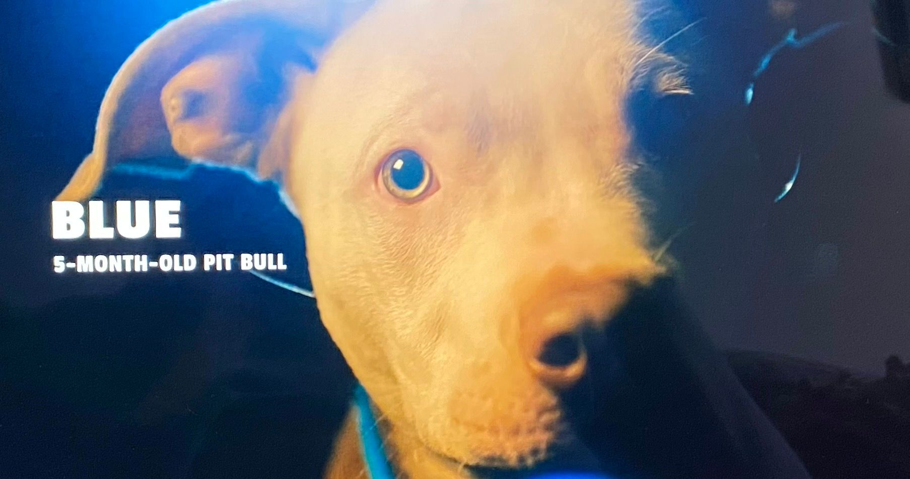 Canine Intervention: Ray & Johnetta's Dog Blue's Breed, Age, Personality & Tricks