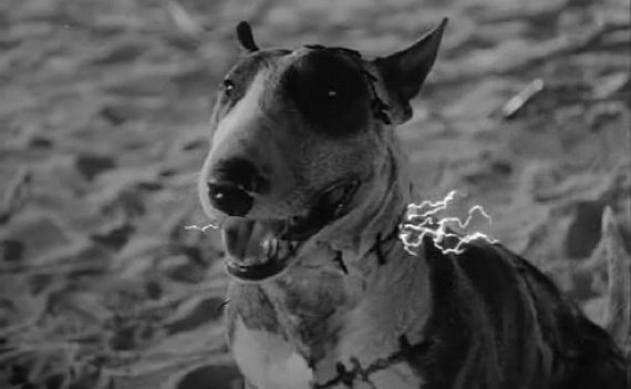 Frankenweenie Official Synopsis Story Details
